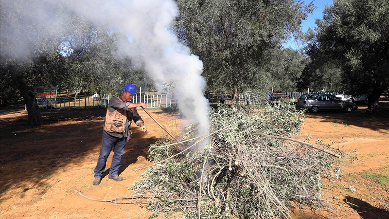 A man in construction gear burns infected olive trees in the middle of a clearing, Italy.