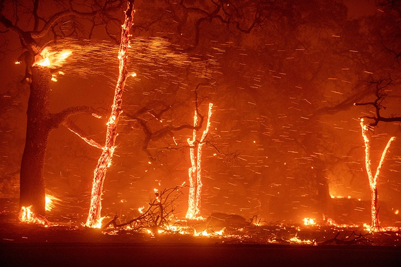 Picture of burning trees and flying embers in Paradise, California.