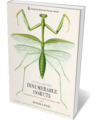 Book jacket 'Innumerable Insects'