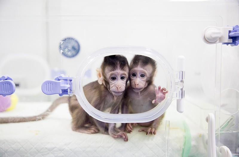 Two cloned macaques named Zhong Zhong and Hua Hua