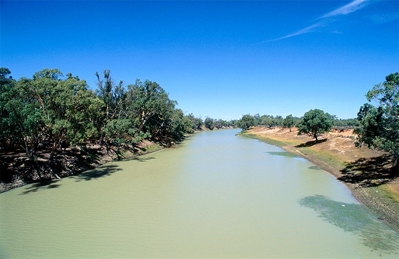 Blue-green algae infesting Darling River during a previous outbreak (date unknown). Australia.