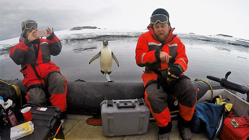 Scientists conduct research from a boat in Antarctica with a penguin hoping on board
