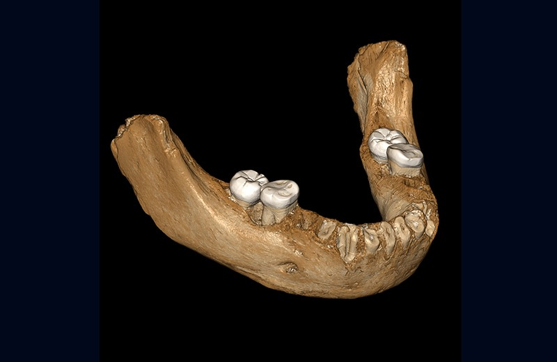 Views of the virtual reconstruction of the Xiahe mandible after digital removal of the adhering carbonate crust.