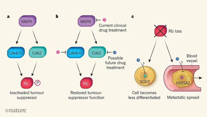genetic cancer drug targets)