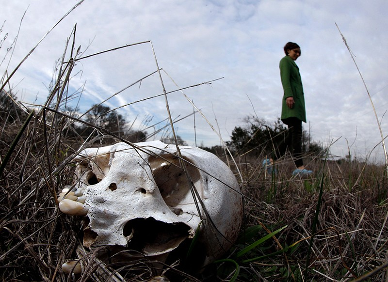 "A skull in the grass at a ""body farm."""