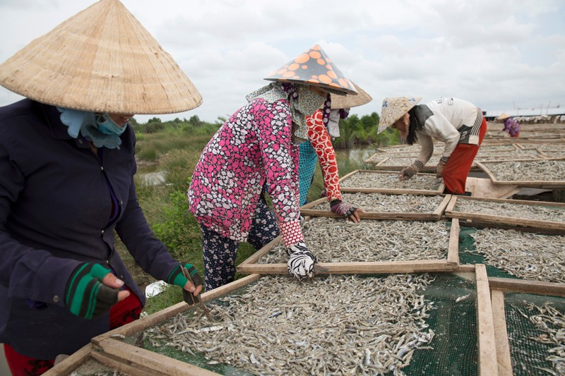 Vietnamese women workers spread out fish to dry in the sun