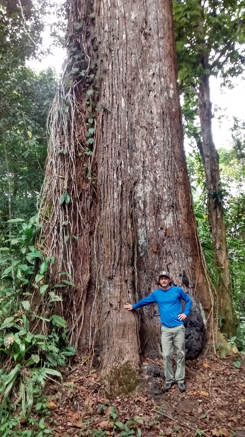 Daniel Piotto standing next to a giant tree (Lecythis pisonis) in the Atlantic Forest of southern Bahia, Brazil in 2016.