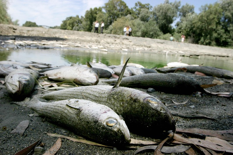 Fish that have died due to severe drought are washed up on a river bank