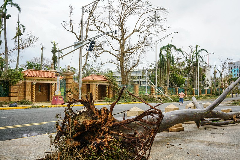 A tree blocks the sidewalk at the University of Puerto Rico, Rio Piedras campus, after Hurricane Maria