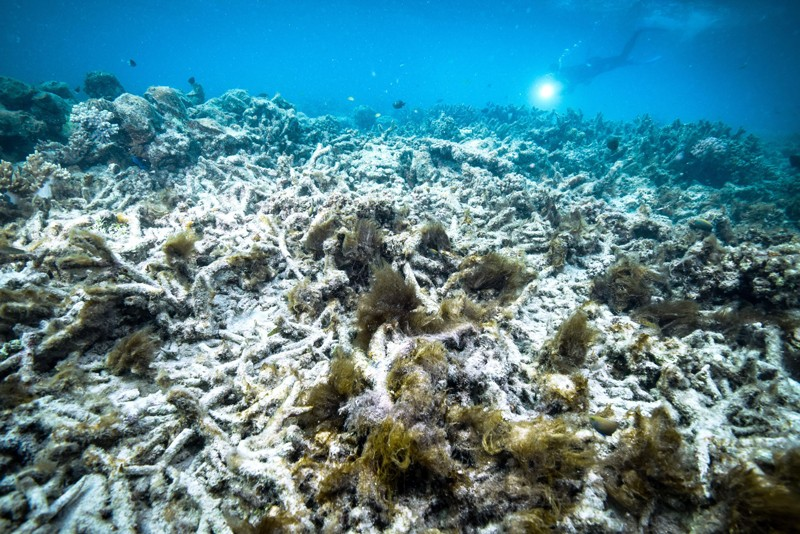 Ecological Grief Grips Scientists Witnessing Great Barrier