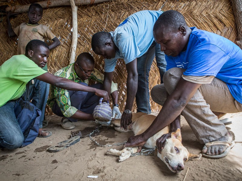 Laures Dossou, second from left, pulls a Guinea worm from Djalibe, a 2-year-old dog.