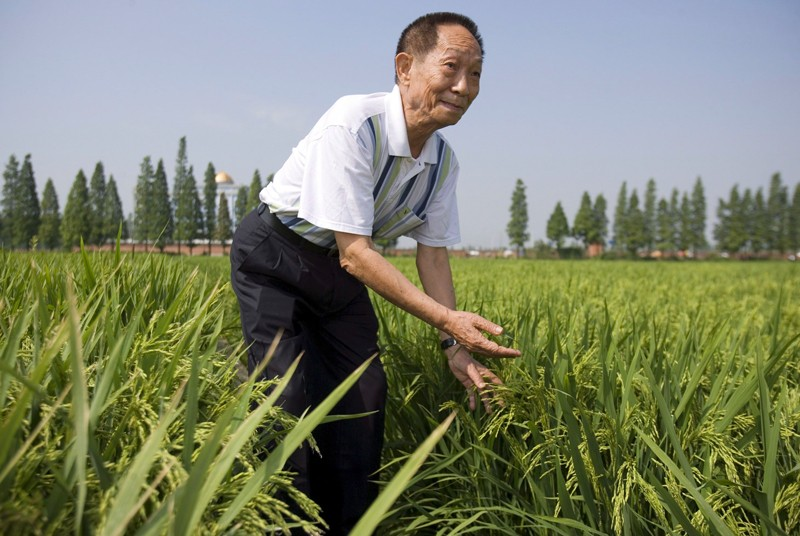 Scientist Yuan Longping stands in a field of Super Hybrid Rice