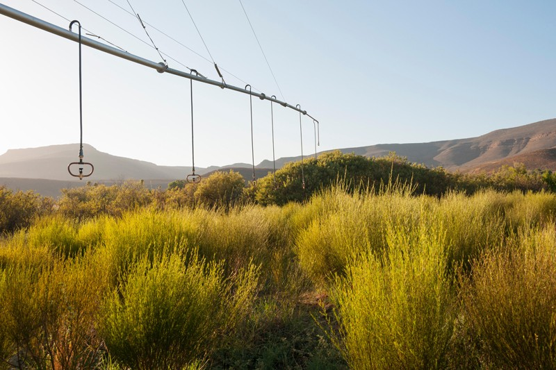 Irrigation system for rooibos tea plantations in the Cederberg mountains in South Africa