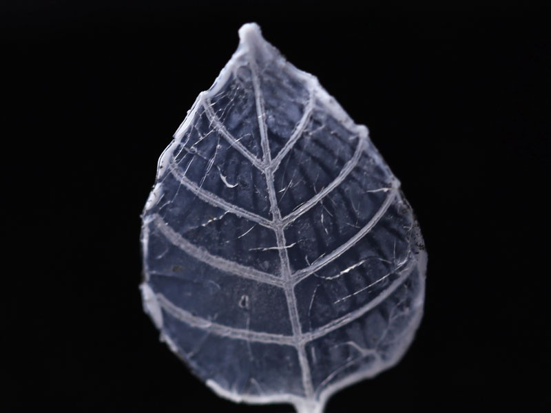 An erbium–ytterbium doped glass composition printed on top of the main body along the primary veins of the leaf.
