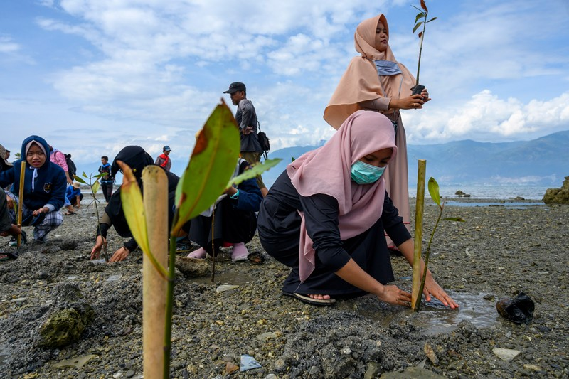 Mangroves are planted along the coastline damaged by the 2018 tsunami in Palu Indonesia