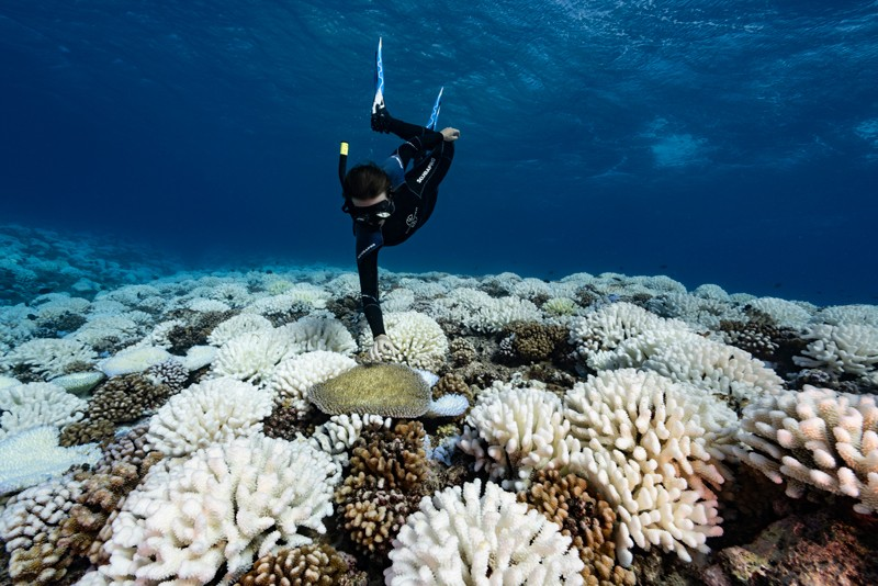 A diver observes major bleaching on the coral reefs of Society Islands, French Polynesia.