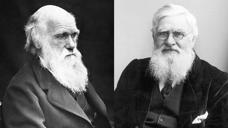 Charles Darwin (LEFT) and Welsh naturalist Alfred Russel Wallace (RIGHT).