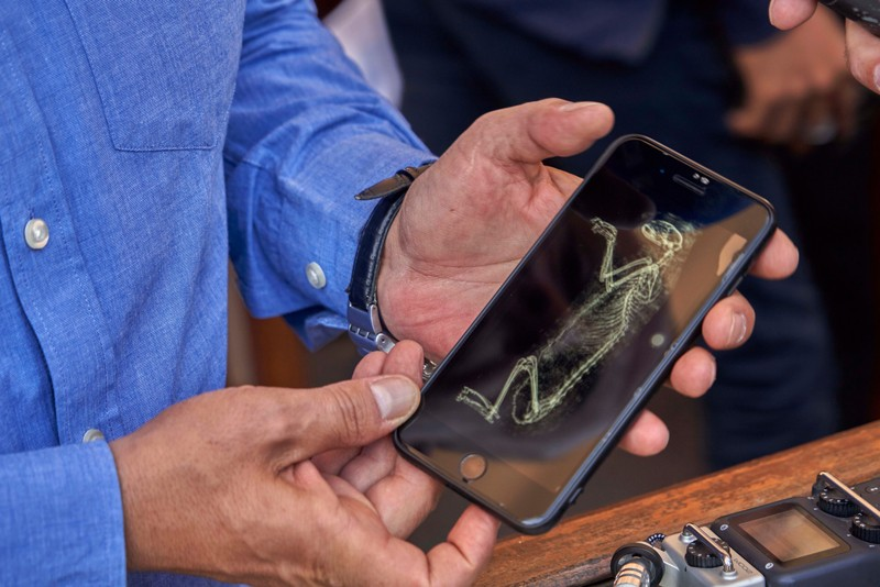 A CT-scan of a feline mummy is displayed on a phone screen in Saqqara, Egypt