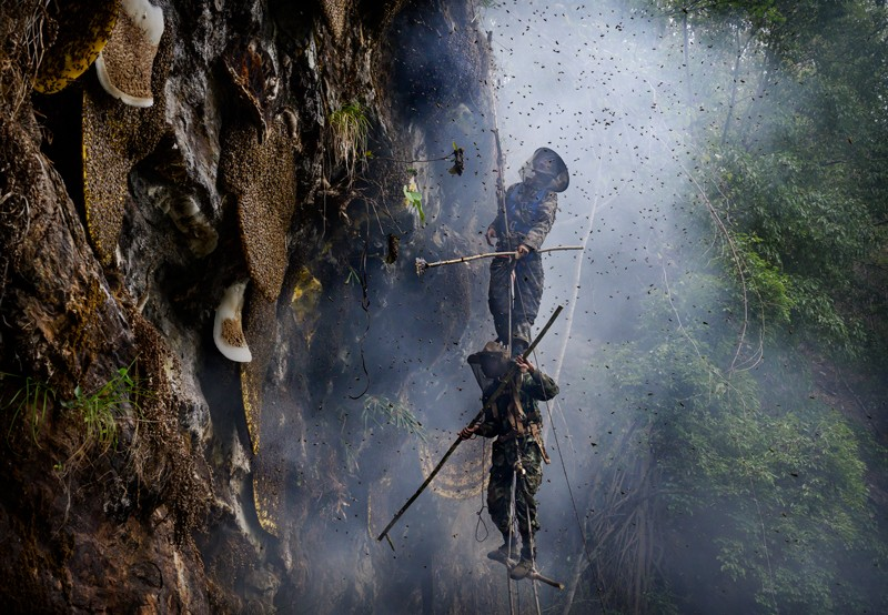Honey hunters gathering wild cliff honey from hives in a gorge in Yunnan province, China