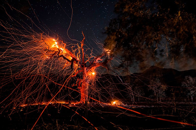 A long exposure photograph shows a tree burning during the Kincade fire in California on October 29, 2019