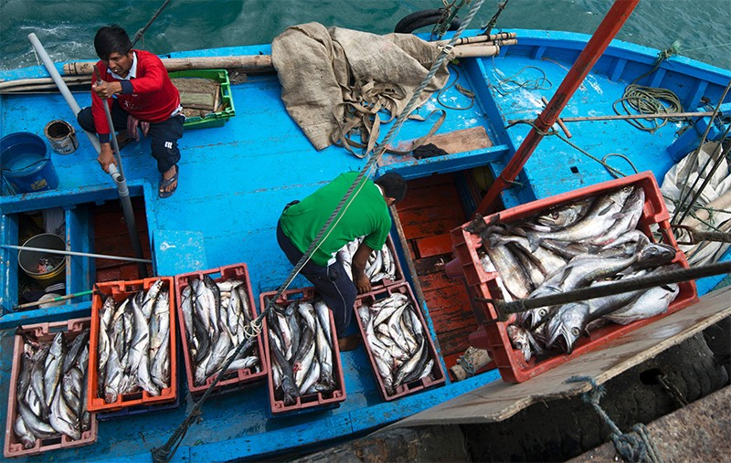 Photo of Workers unloading the catch of the day at the pier in Nuro, Piura, northern Peru, on July 12, 2016