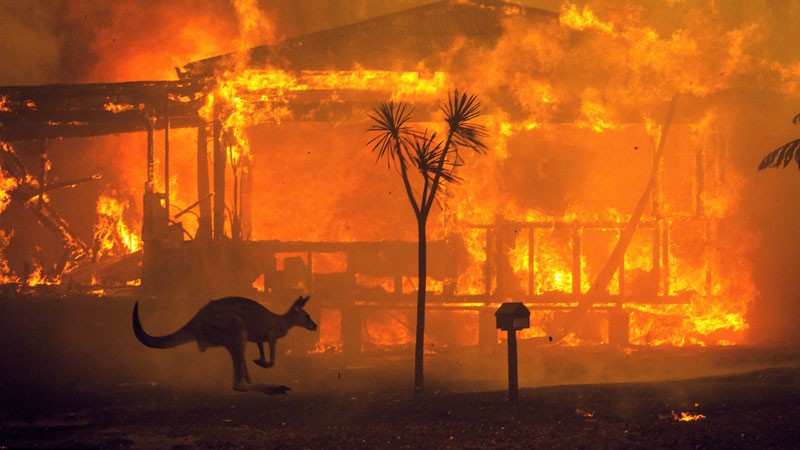 A kangaroo rushes past a burning house in Lake Conjola.