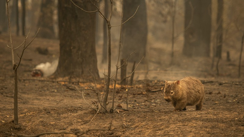 Bushfires sweep across the state of NSW, 2020.