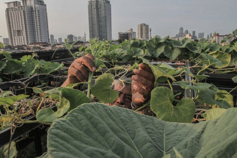 A man cares for plants on the roof of his house with tower blocks in the background, Jakarta, Indonesia