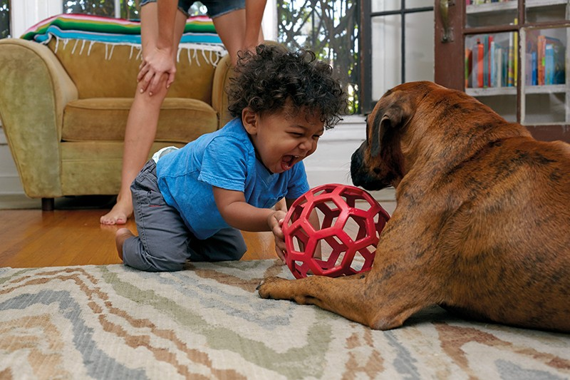A baby plays with a ball and a dog on the carpet of a domestic home