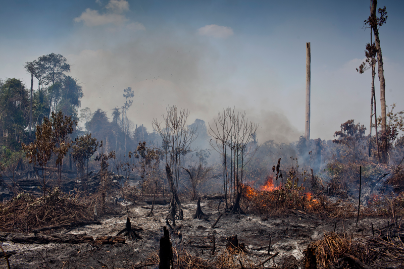 Smoke rises from open flames on dry tree branches in an area of deforested peatland