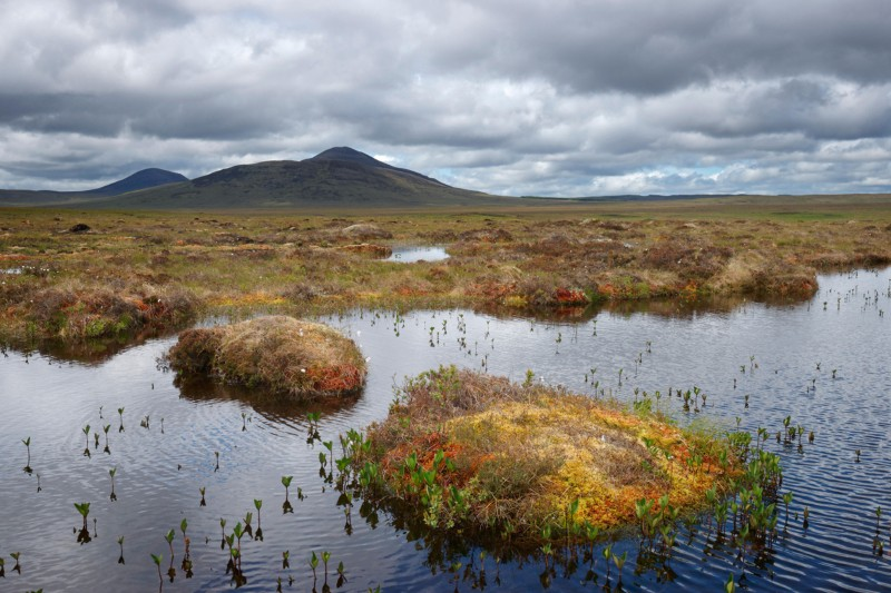 Pools of water in peatland under a cloudy sky with a hill in the background