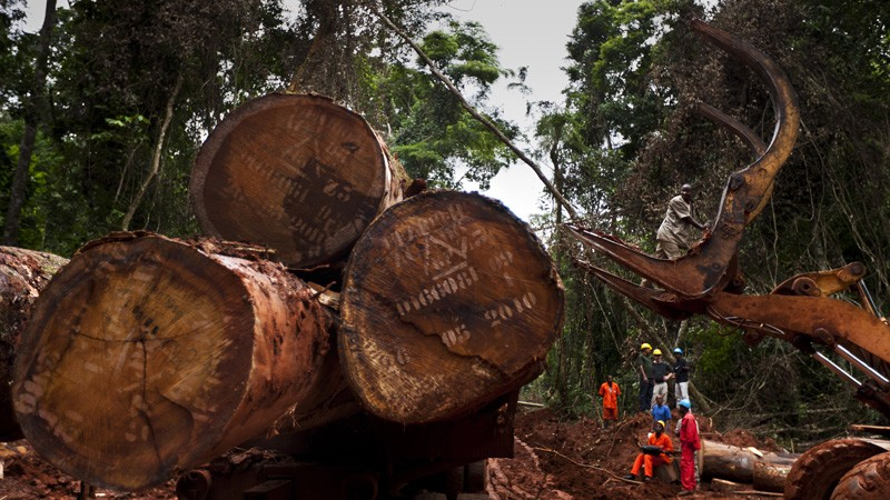 Logging concession in the Kika region of Cameroon.