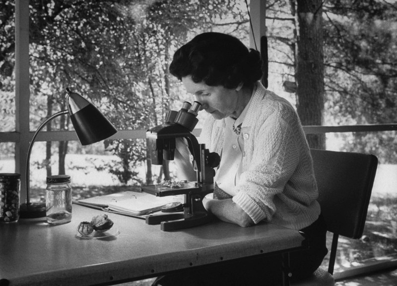 In a black and white photo Rachel Carson looks through a microscope while sitting at a desk