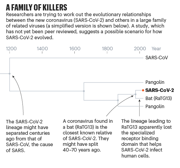 A family of killers. Chart showing evolution of SARS-CoV-2.