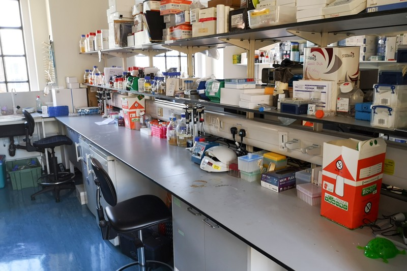 John Tregoning's tidy lab bench