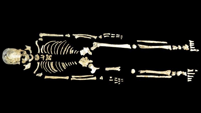 Whole skeleton of Qihe 2, a ~8,400-year-old individual from Qihe cave, Fujian, China.