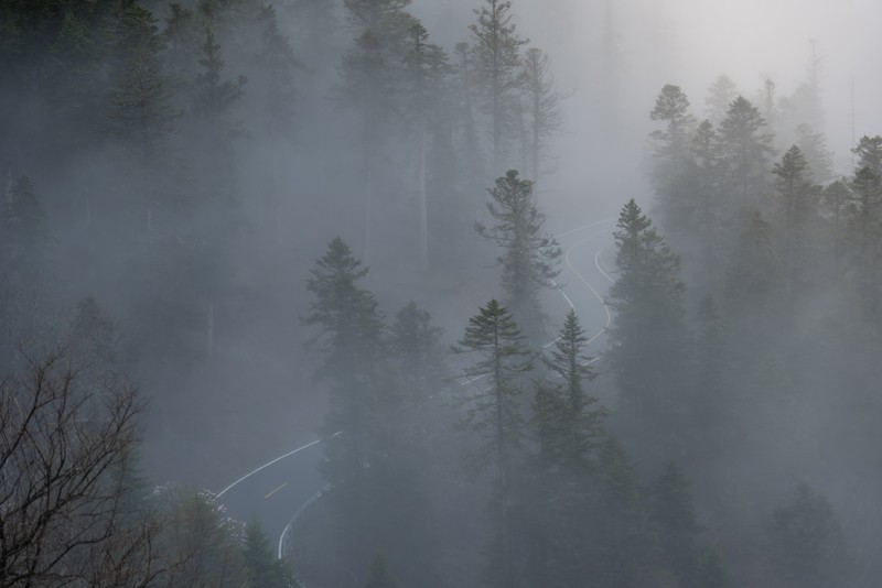 Road leading through misty trees