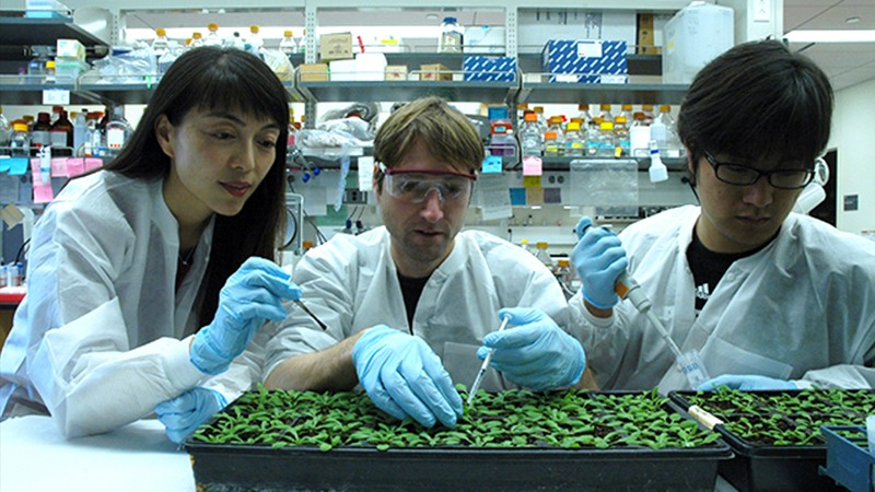 Hailing Jin and co-workers look at seedlings in seed trays