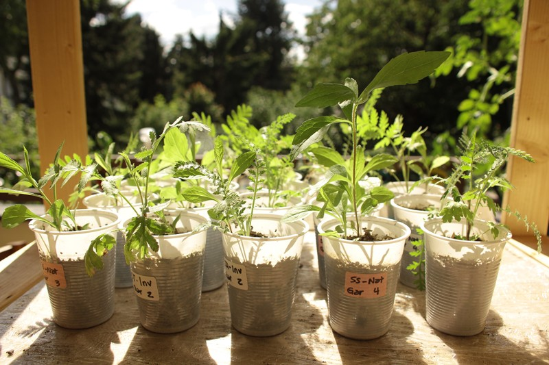 Small plants growing in plastic cups on a balcony