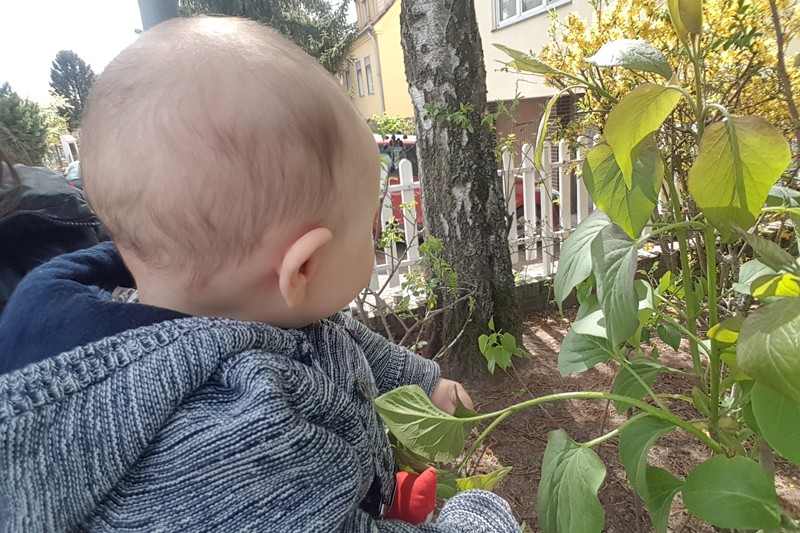 A baby looking towards a front yard