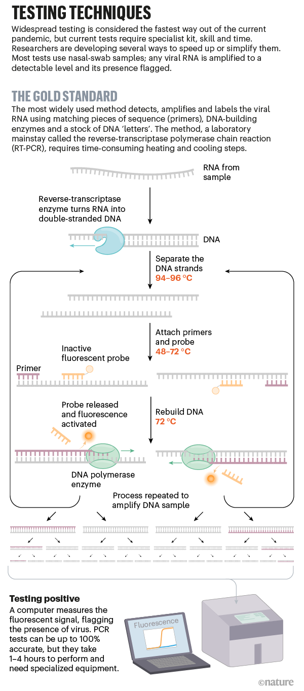 A graphic explaining a RT-PCR-based viral diagnostic test.