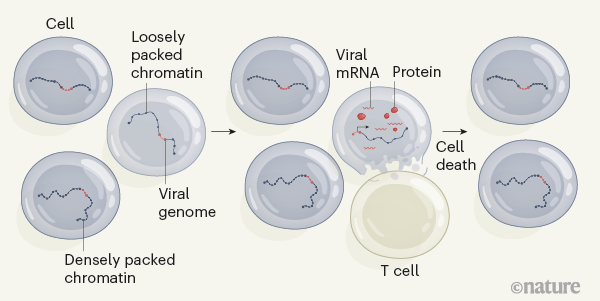 vírus és 5. elit