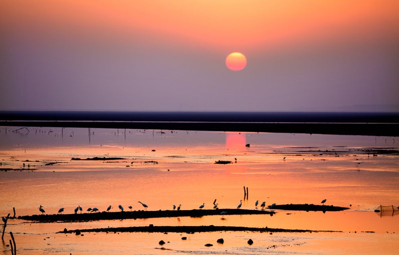 Sunset over a wetland, with the silhouettes of birds.