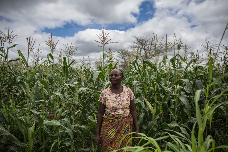 A farmer stands amongst her crops in Kaumba, Zambia
