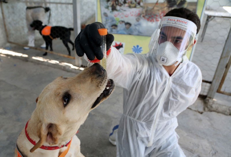 A man in protective gear holds a vial of liquid up to the nose of a dog.