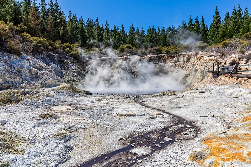 Hell's Gate geothermal park in New Zealand