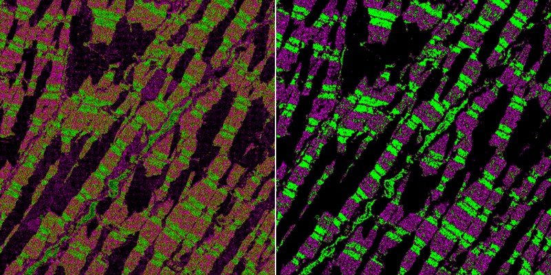 Two panels show an original micrograph of mouse heart tissue, and denoised micrograph which is sharper and brighter