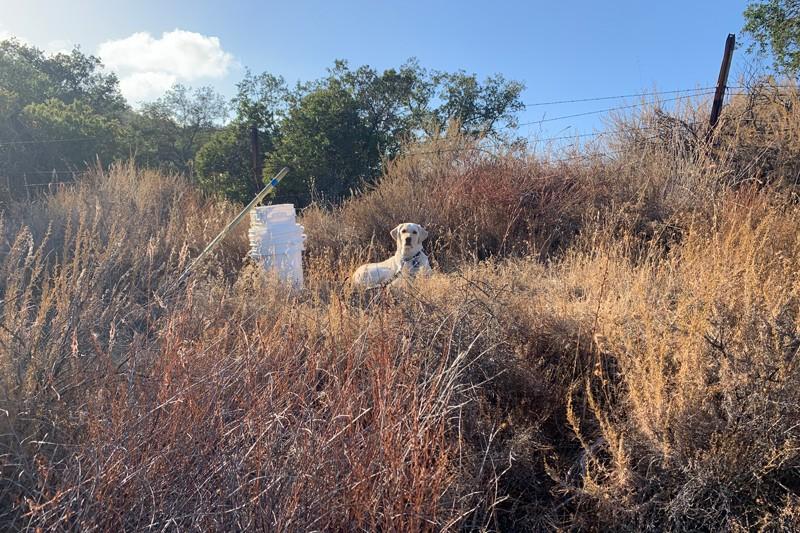 Bing in the field
