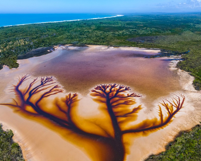 Aerial photograph of 'the tree of life' created from tea tree oil in a lake