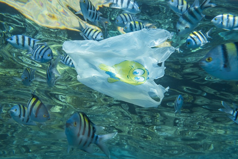 Close-up of a white plastic bag drifting under the surface with a school of tropical fish
